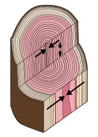 木材の収縮の比率
