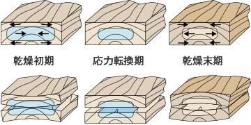 乾燥過程の応力と応力による変形